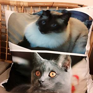 cat-cushion-alfie-betty